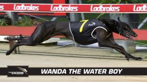 Wanda the water boy ready to fly