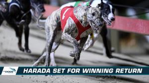 Good Odds Harada set for winning return to racing